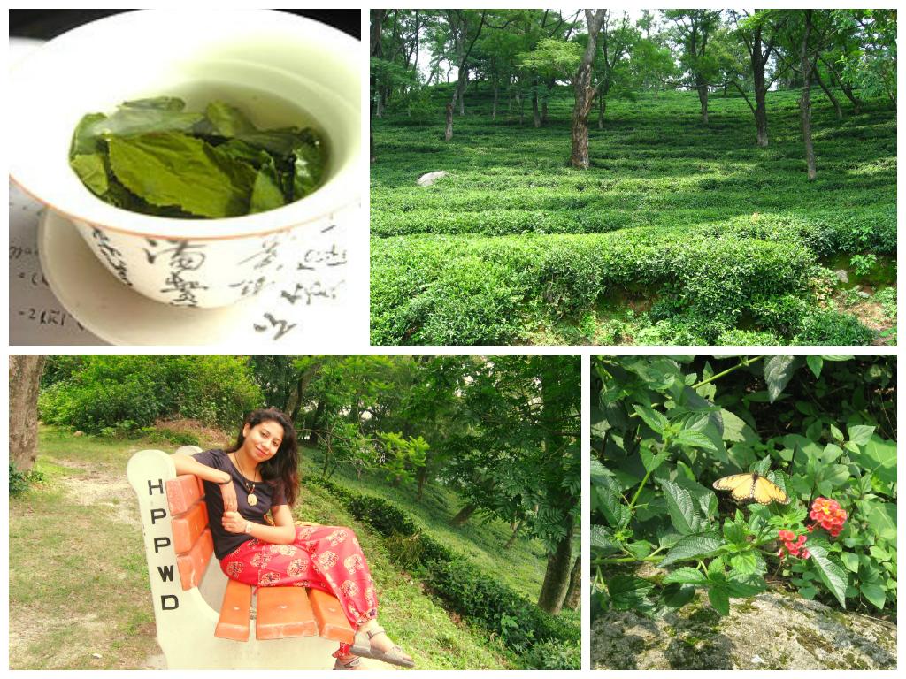 #InspireAFragrance from  the Tea Gardens of Dahramshala