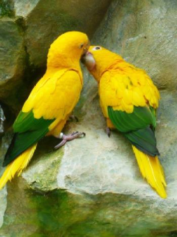 Chirpy #LoveBirds..
